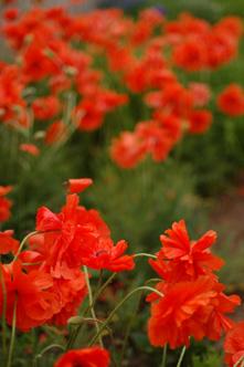 Garden _0408