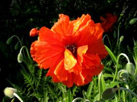 May_2007_163